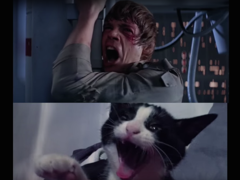 WATCH: Empire Strikes Back recreated with cats