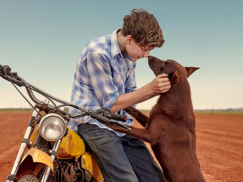 5 of Red Dog's Aussie movie mates (and one Kiwi)