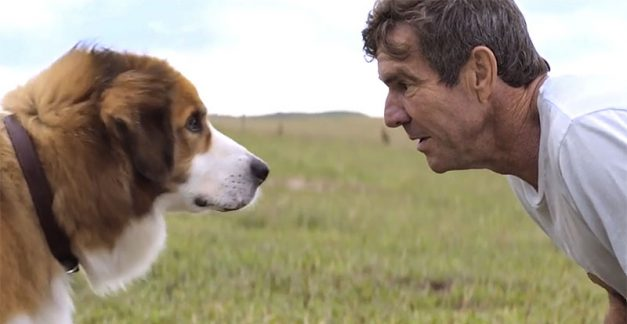 A Dog's Purpose on DVD and Blu-ray August 9