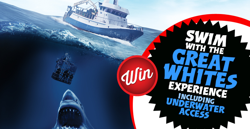 Want to swim with Great White sharks?