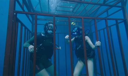 47 Metres Down on DVD and Blu-ray December 6
