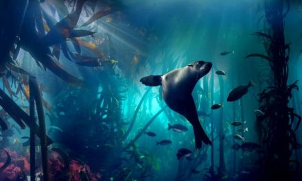 Blue Planet II – 4K Ultra HD review