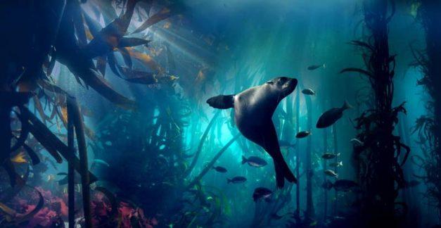 Blue Planet II – 4K Ultra HD review