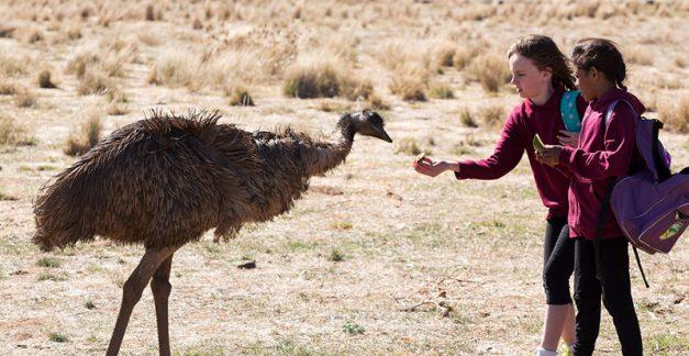 Australian films shine at TIFF