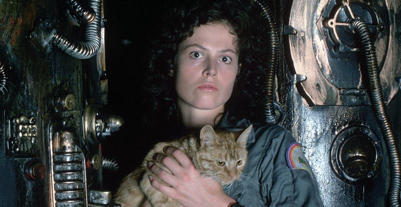 Alien cat Jonesy gets own tale