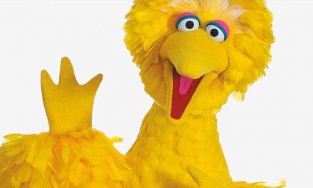 Sesame Street's Big Bird hanging up the feathers
