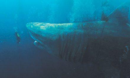 The Meg on DVD, Blu-ray, 3D and 4K November 28