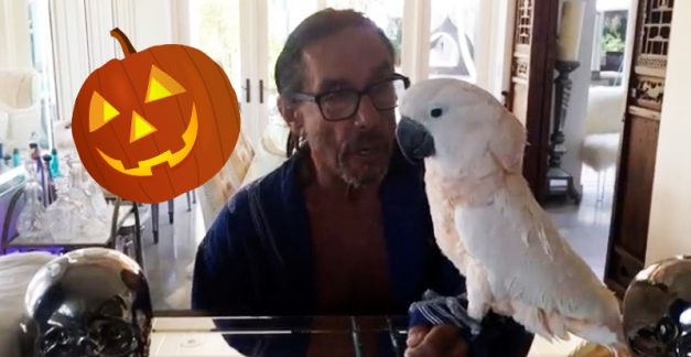 Watch Biggy and Iggy Pop's Halloween greeting