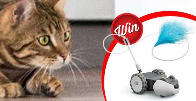 Meow Time! Score one of five Petronics Mousr Robotic Cat Toys