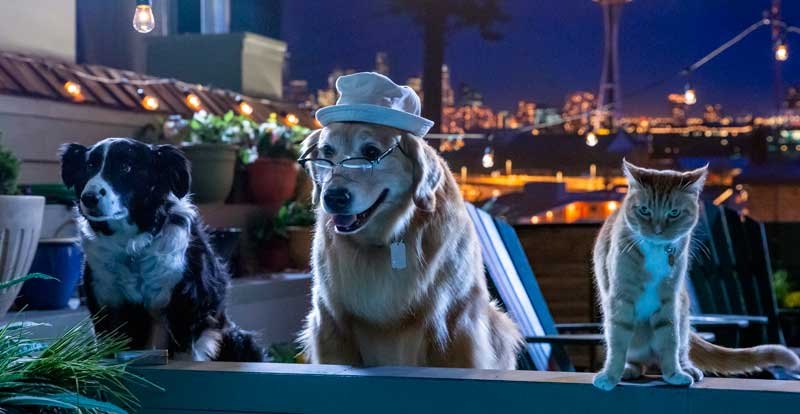 Cats & Dogs 3: Paws Unite on DVD January 6