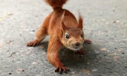 Squirrel! It's a new Disney superhero
