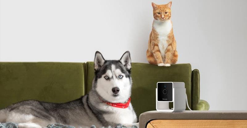 Smart Home: Tech your pet