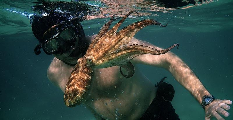 My Octopus Teacher